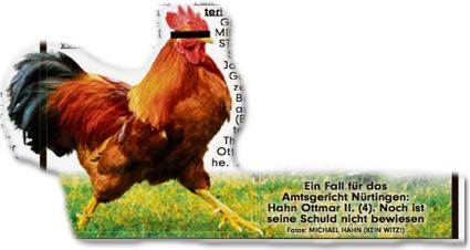 Ein Fall für das Amtsgericht Nürtingen: Hahn Ottmar II. (4). Noch ist seine Schuld nicht bewiesen. Fotos: Michael Hahn (Kein Witz!)