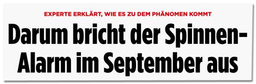 Screenshot Bild.de - Experte erklärt, wie es zu dem Phänomen kommt - Darum bricht der Spinnen-Alarm im September aus