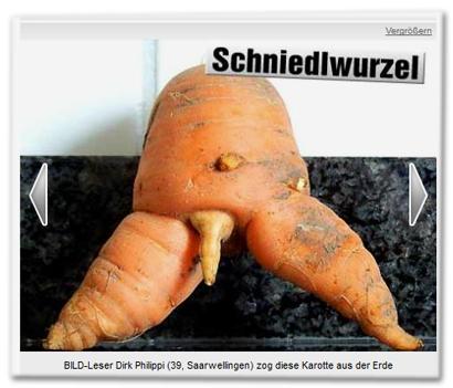 Schniedlwurzel - BILD-Leser Dirk Philippi (39, Saarwellingen) zog diese Karotte aus der Erde