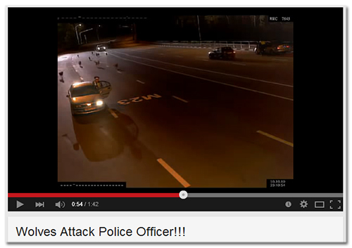 Youtube-Video mit dem Titel 'Wolves Attack Police Officer!!!'